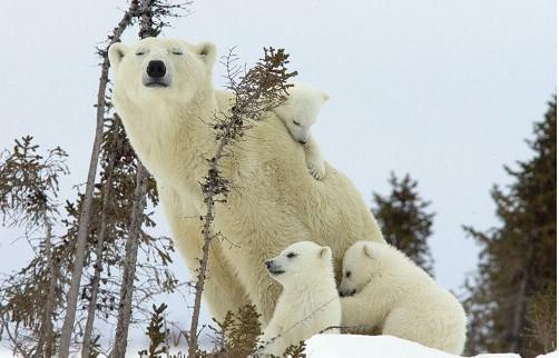 北极熊蟒蛇一百斤的监狱图片