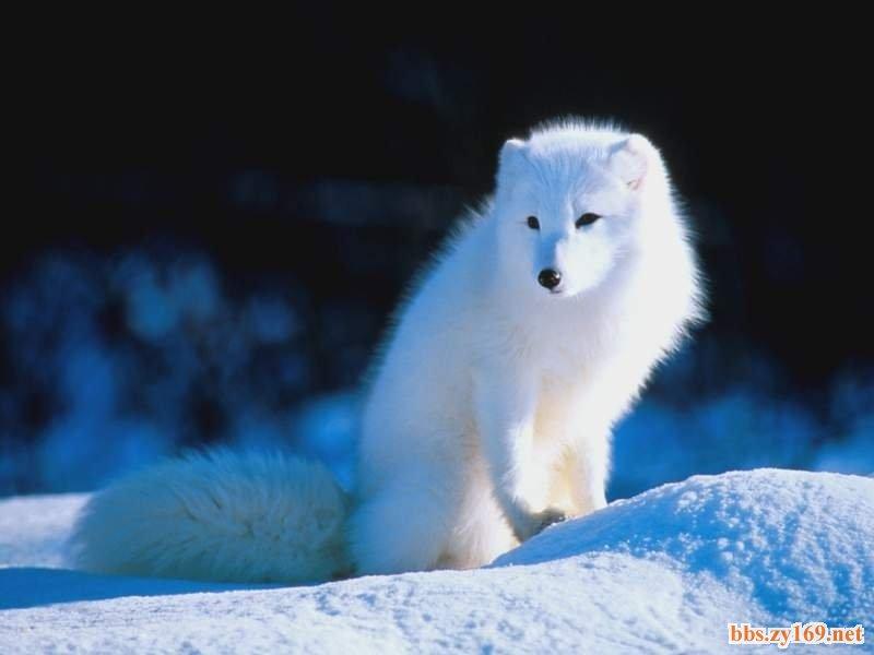 「狐狸」的圖片搜尋結果