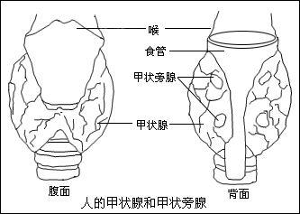 腺+��\y���l9�.����(c9��_甲状旁腺功能减退性心肌病